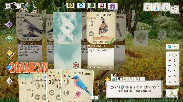 Wingspan - Game thẻ bài tạo cơ hội thể hiện đẳng cấp chơi chim chuyên nghiệp 2